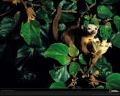 National Geographic: Monkey
