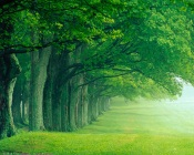 Beautiful Green Forest in the Fog