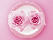 Two Pink Roses on the Plate