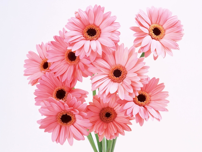 flower wallpapers. wallpapers Pink Flowers