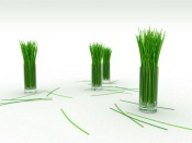 Grass in a Glass