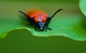 Macro Photos of a Beetle With a Mustache
