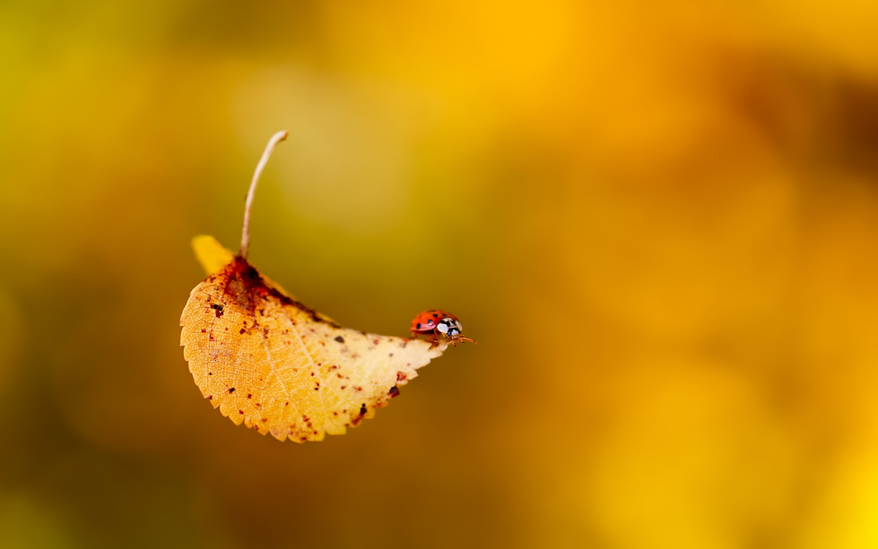 Journey on the Yellow Leaf